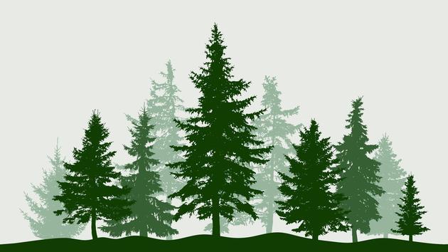 Pourquoi acheter des parts de forêt peut s'avérer gagnant